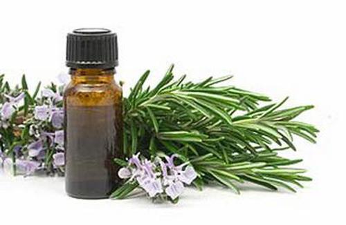 Tinh dầu hương thảo – Rosemary Extra Oil