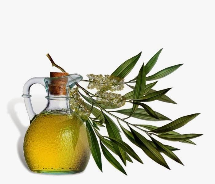Tinh dầu bạch đàn chanh – Eucalyptus Citriodara Oil