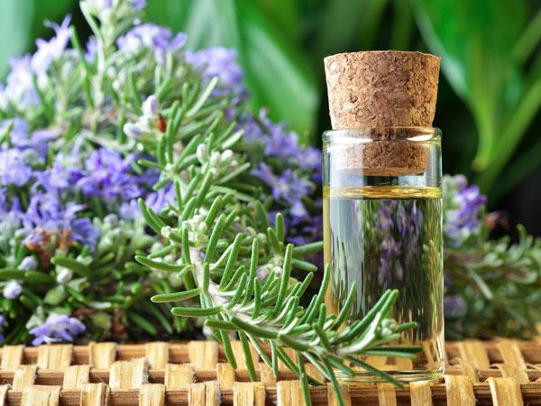 Tinh dầu cỏ xạ hương – Thymus Vulgaris