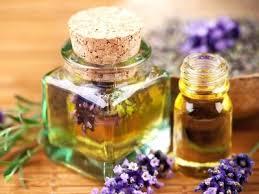 Tinh dầu hương nhu – Tree basill oil