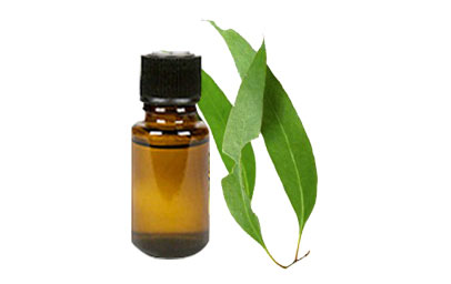 Tinh dầu khuynh diệp – Eucalyptus globulus